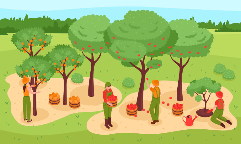 Illustration of apple trees and apple pickers at work